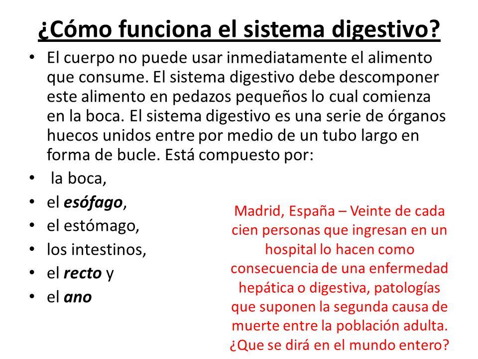 ¿Cómo funciona el sistema digestivo
