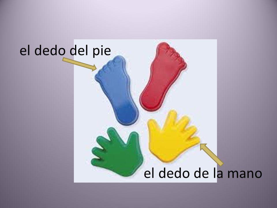 el dedo del pie el dedo de la mano