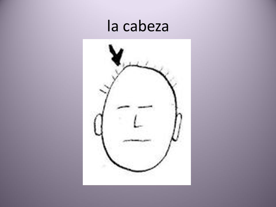 la cabeza
