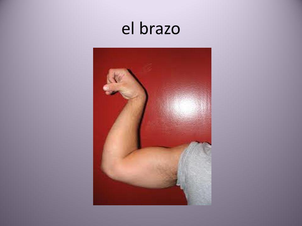 el brazo