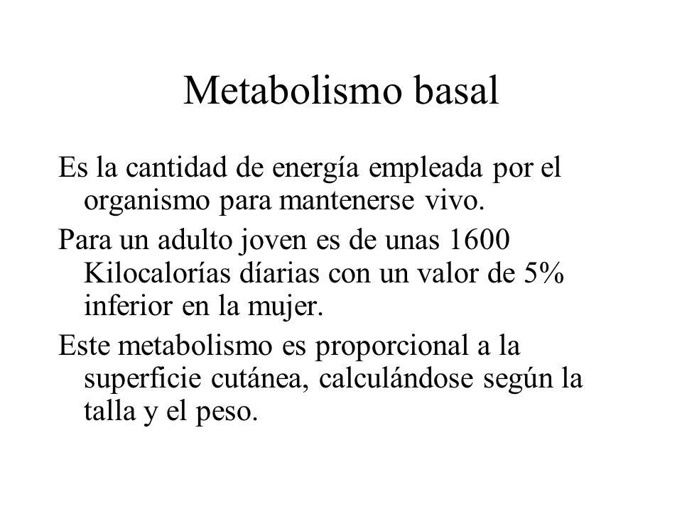Metabolismo basal Es la cantidad de energía empleada por el organismo para mantenerse vivo.