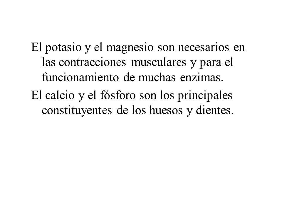 El potasio y el magnesio son necesarios en las contracciones musculares y para el funcionamiento de muchas enzimas.