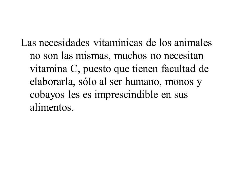 Las necesidades vitamínicas de los animales no son las mismas, muchos no necesitan vitamina C, puesto que tienen facultad de elaborarla, sólo al ser humano, monos y cobayos les es imprescindible en sus alimentos.