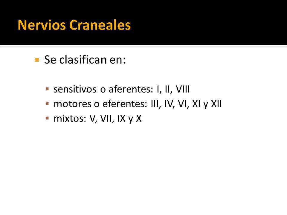 Nervios Craneales Se clasifican en: