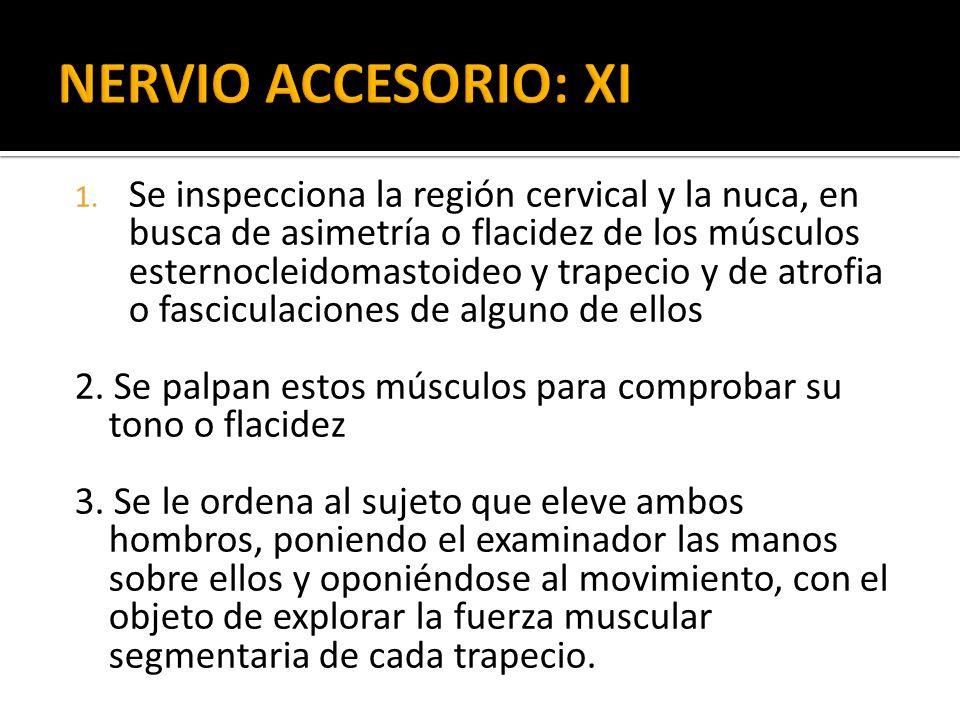 NERVIO ACCESORIO: XI