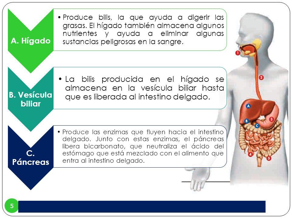A. Hígado