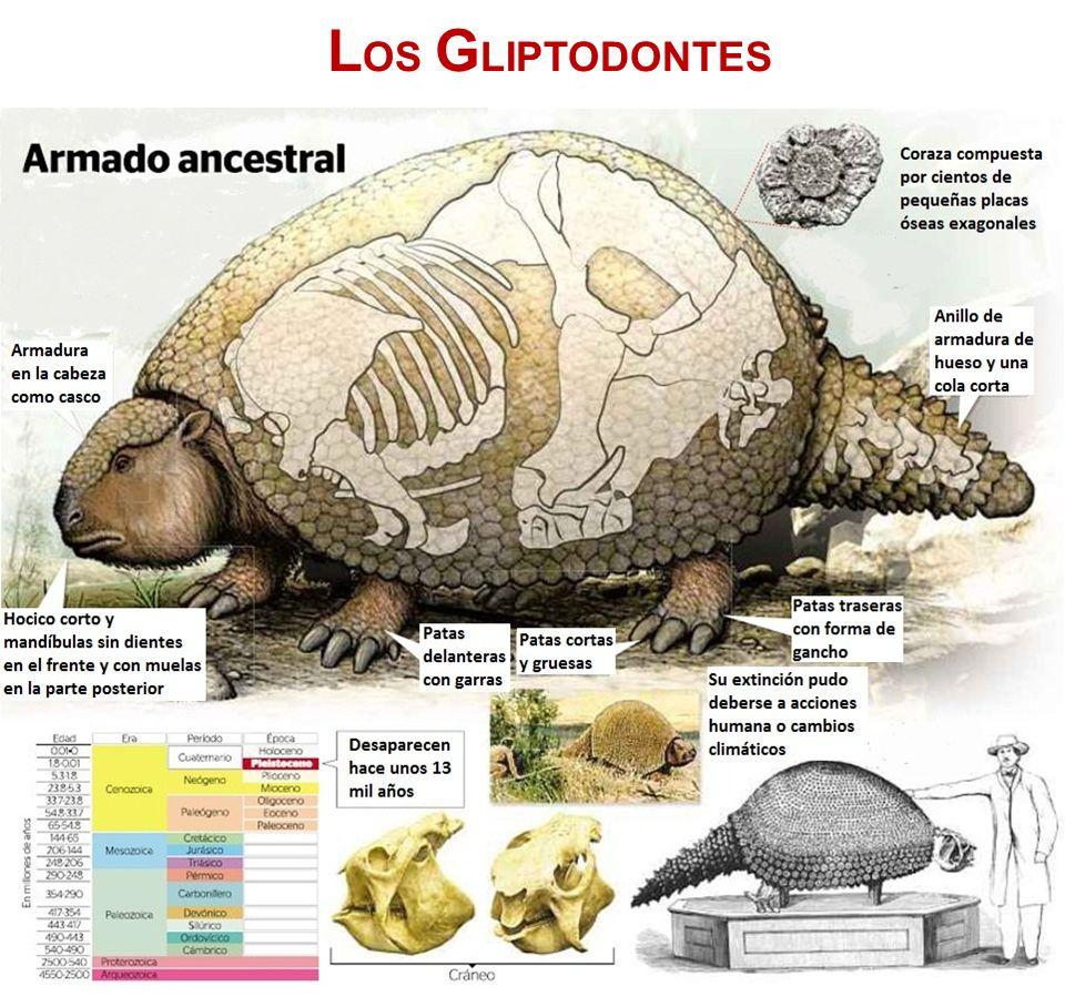 LOS GLIPTODONTES