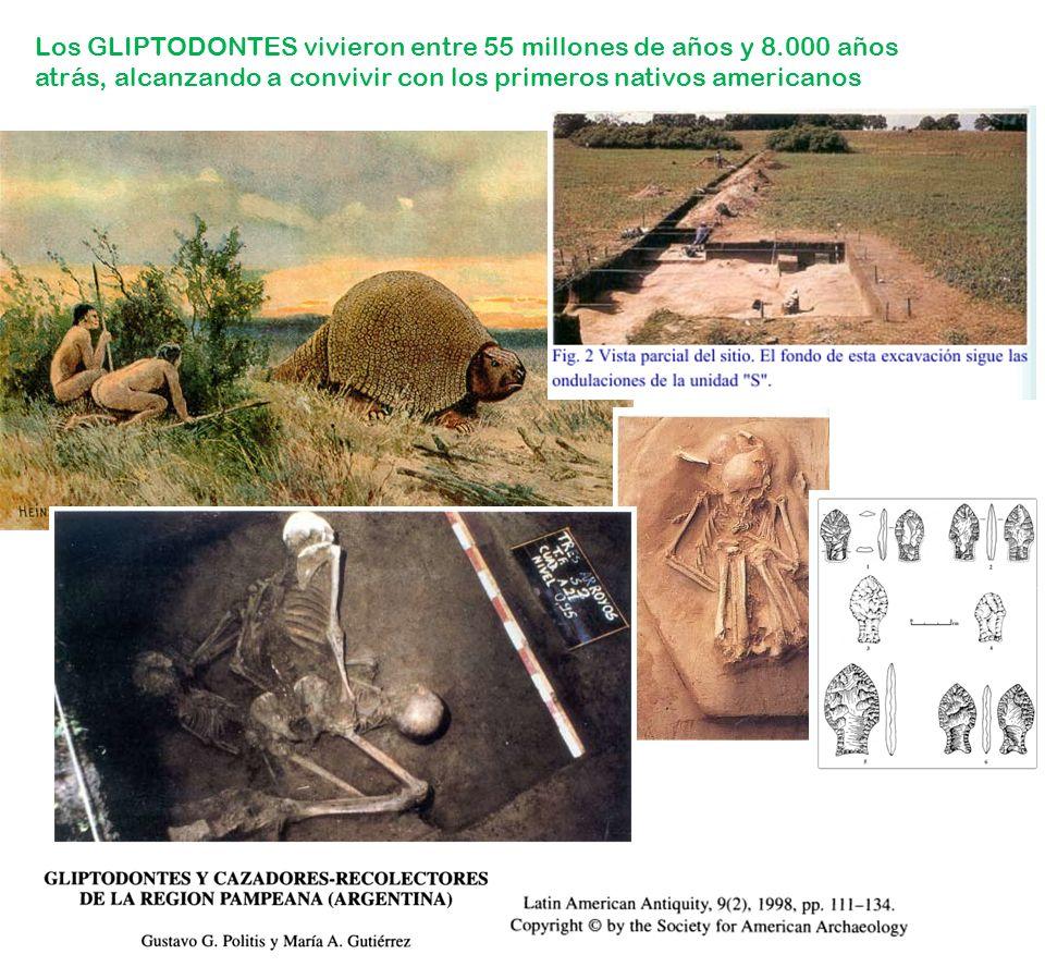 Los GLIPTODONTES vivieron entre 55 millones de años y 8