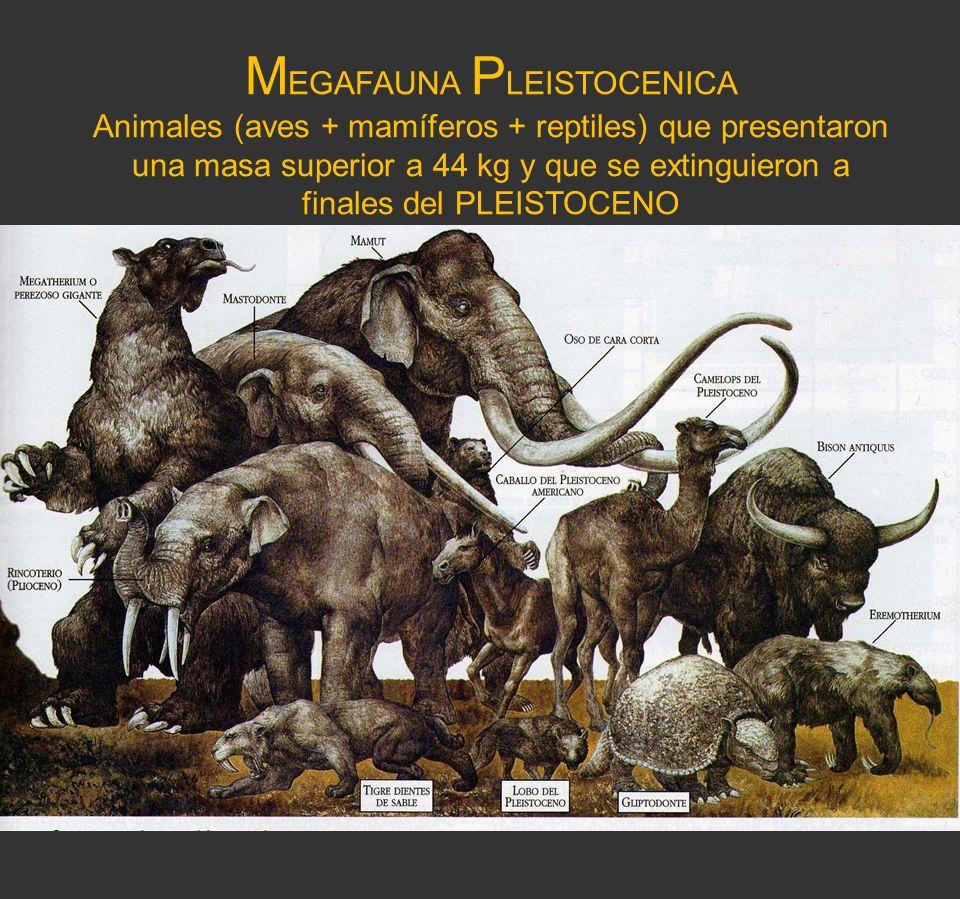 MEGAFAUNA PLEISTOCENICA