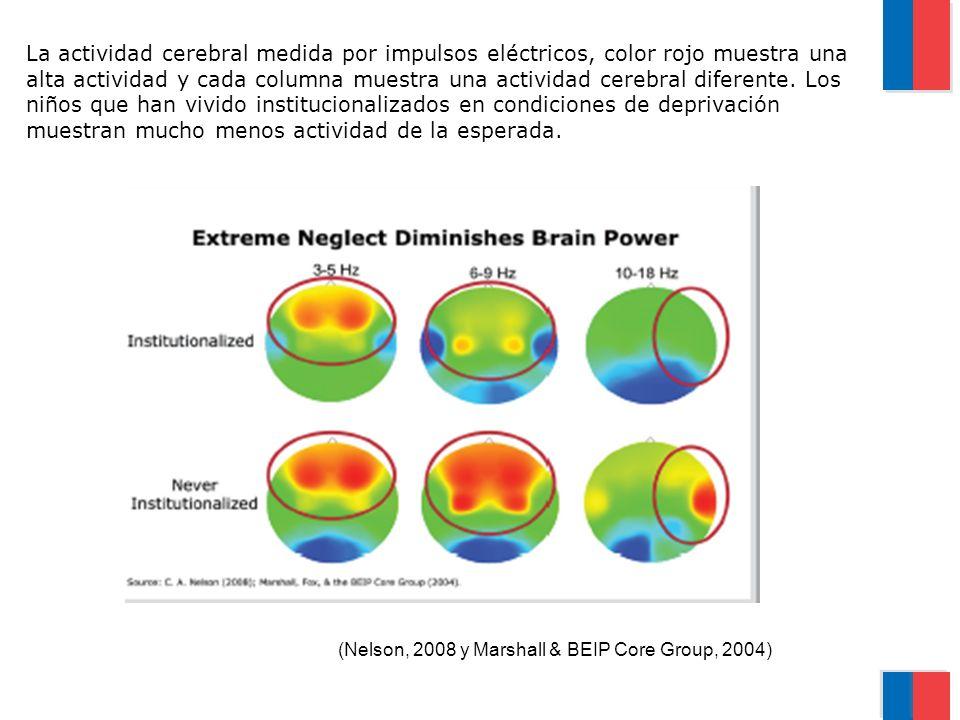 La actividad cerebral medida por impulsos eléctricos, color rojo muestra una alta actividad y cada columna muestra una actividad cerebral diferente. Los niños que han vivido institucionalizados en condiciones de deprivación muestran mucho menos actividad de la esperada.