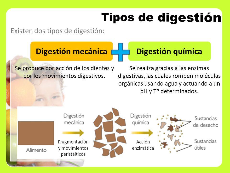 Tipos de digestión Digestión mecánica Digestión química