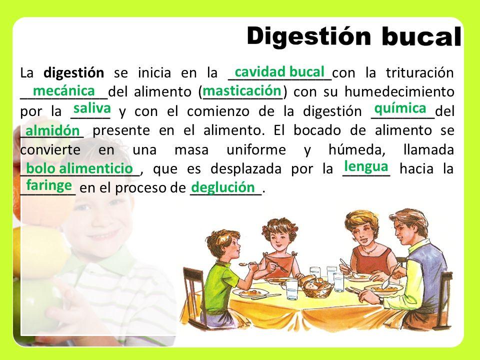 Digestión bucal