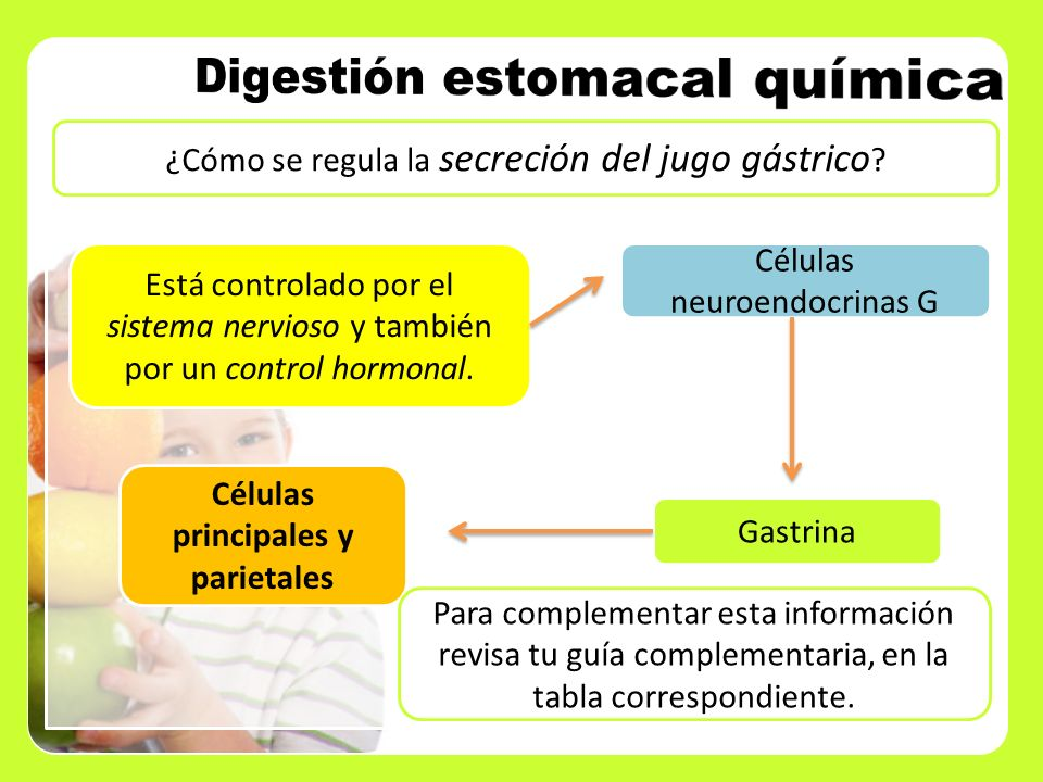 Células principales y parietales