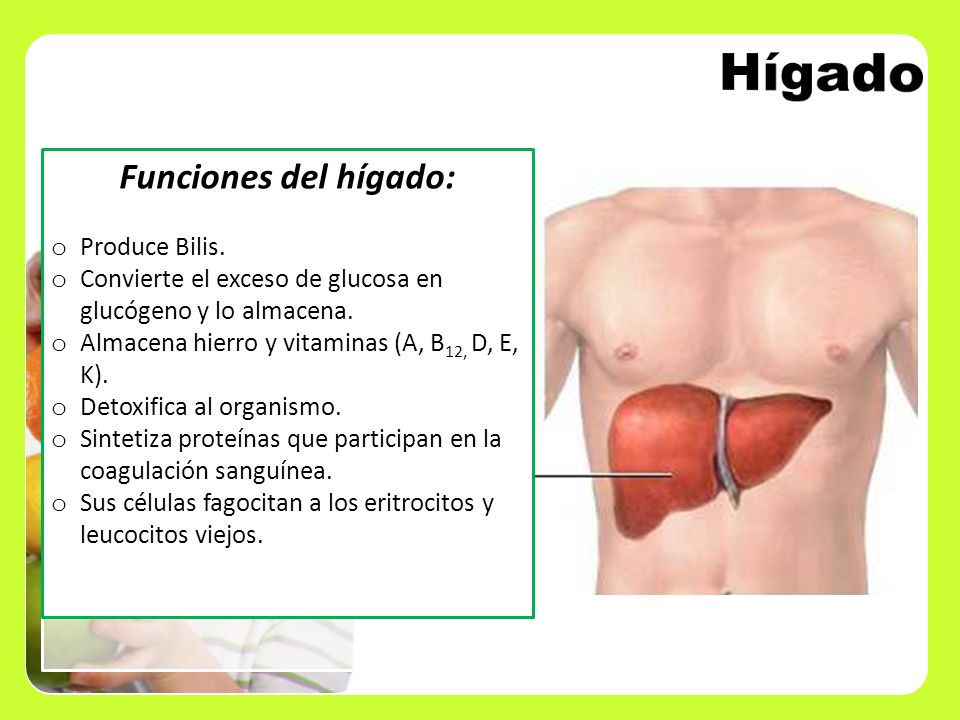 Hígado Funciones del hígado: Produce Bilis.