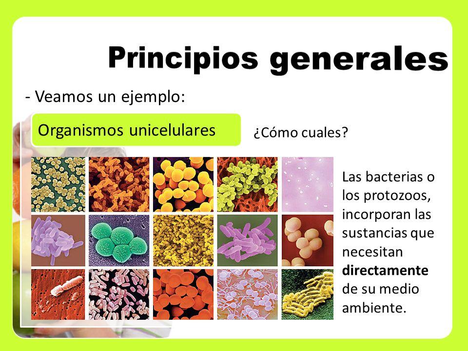Principios generales Veamos un ejemplo: Organismos unicelulares