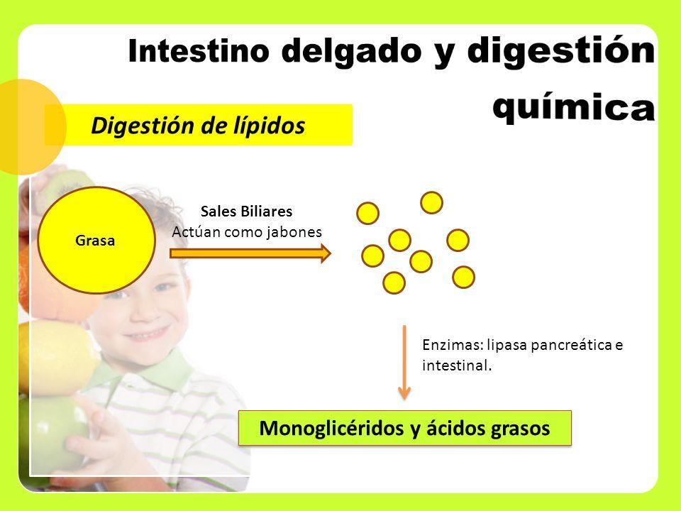 Monoglicéridos y ácidos grasos