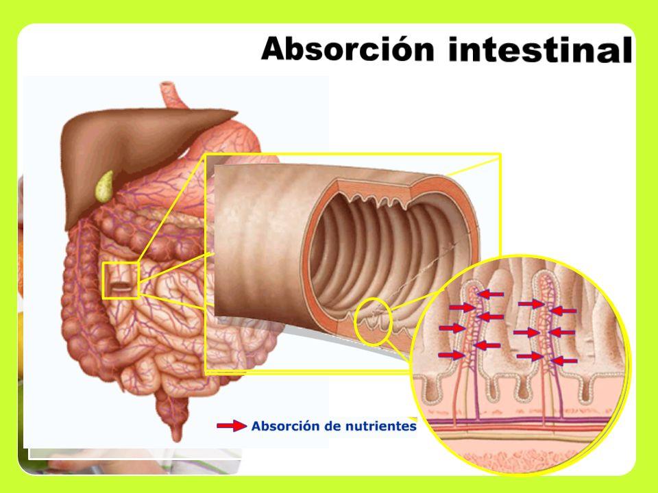 Absorción intestinal