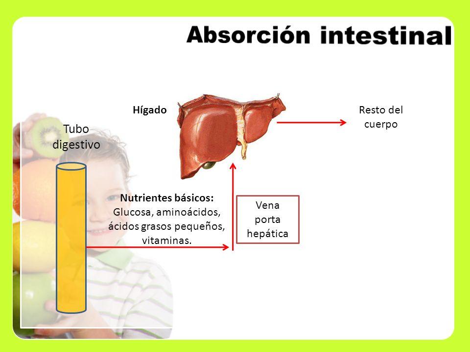Absorción intestinal Tubo digestivo Hígado Resto del cuerpo