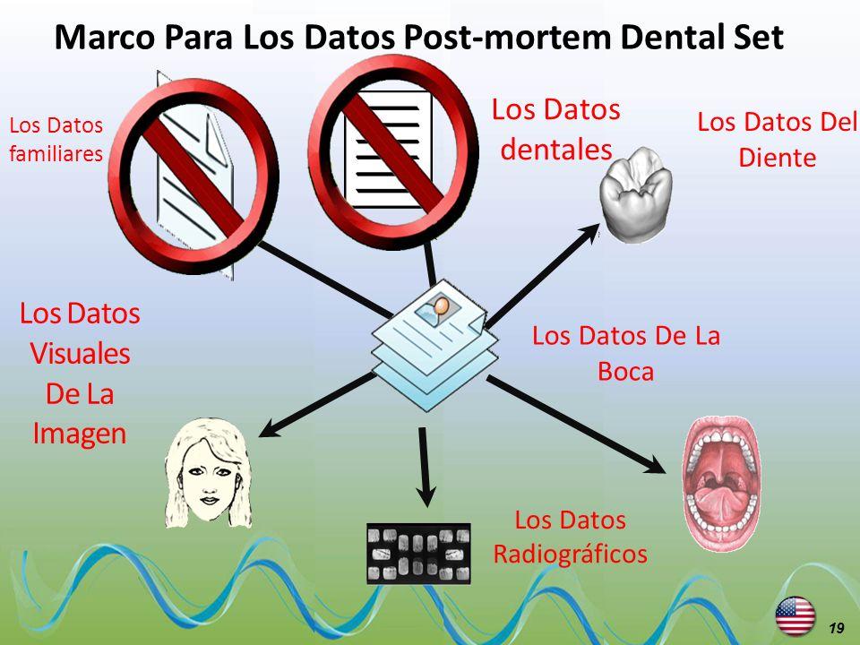 Marco Para Los Datos Post-mortem Dental Set