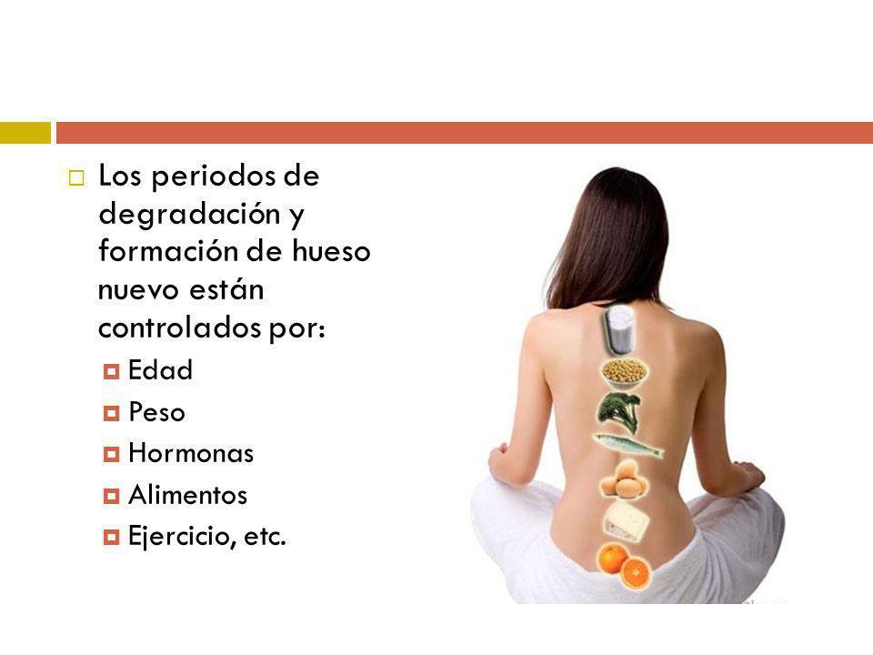 Los periodos de degradación y formación de hueso nuevo están controlados por: