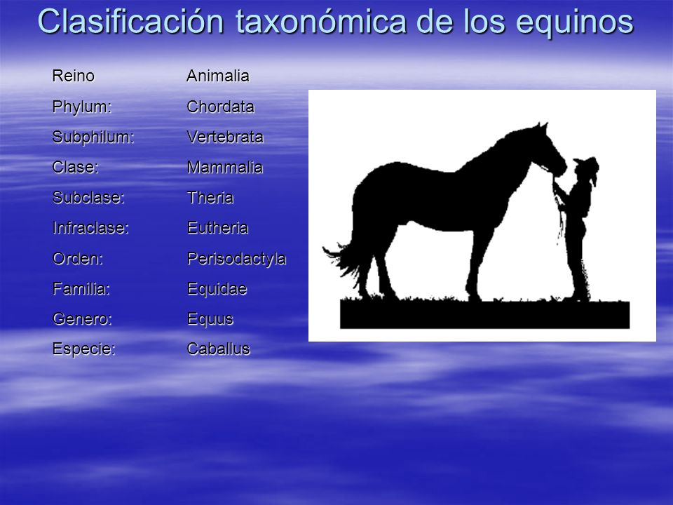 Clasificación taxonómica de los equinos