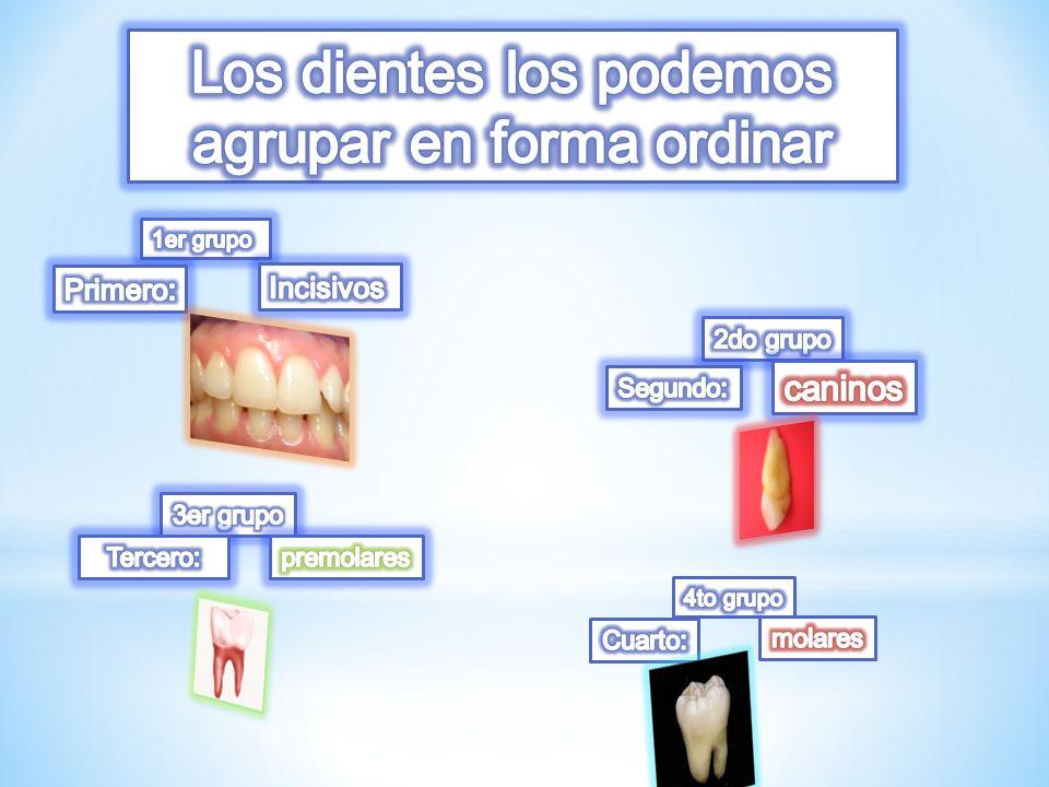 Los dientes los podemos agrupar en forma ordinar