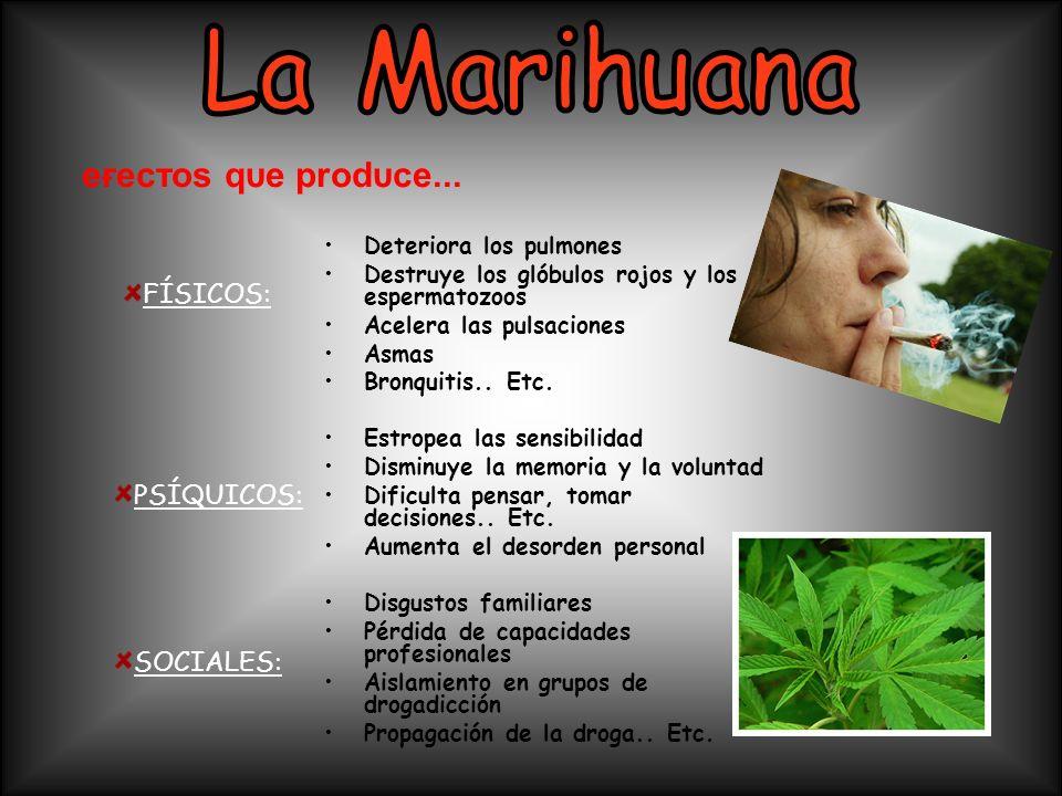 La Marihuana eғecтoѕ qυe prodυce... FÍSICOS: PSÍQUICOS: SOCIALES:
