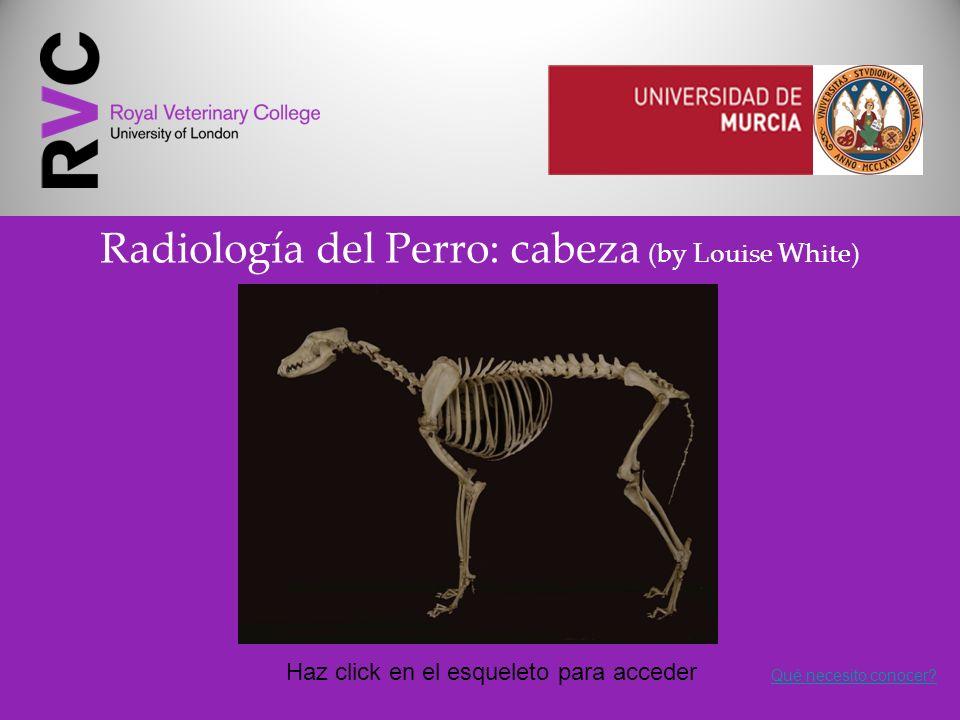 Radiología del Perro: cabeza (by Louise White)