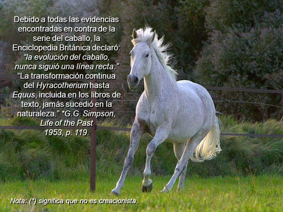 Debido a todas las evidencias encontradas en contra de la serie del caballo, la Enciclopedia Británica declaró: la evolución del caballo, nunca siguió una línea recta. La transformación continua del Hyracotherium hasta Equus, incluida en los libros de texto, jamás sucedió en la naturaleza. *G.G. Simpson, Life of the Past 1953, p. 119.