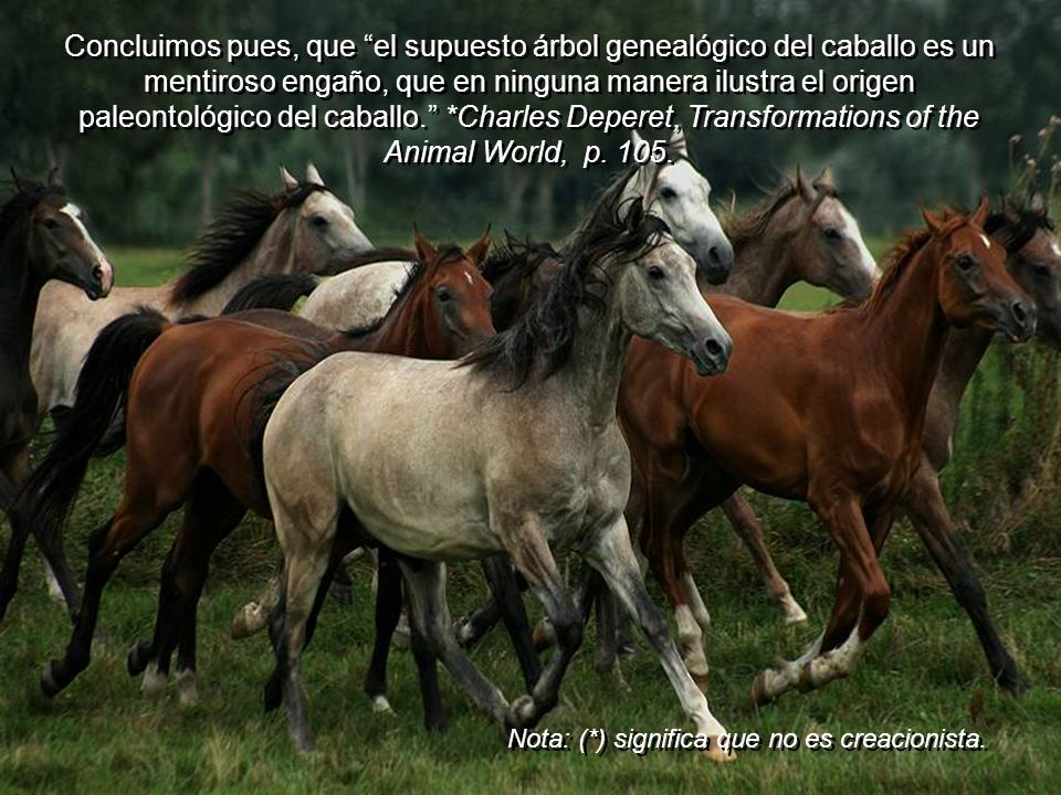 Concluimos pues, que el supuesto árbol genealógico del caballo es un mentiroso engaño, que en ninguna manera ilustra el origen paleontológico del caballo. *Charles Deperet, Transformations of the Animal World, p. 105.