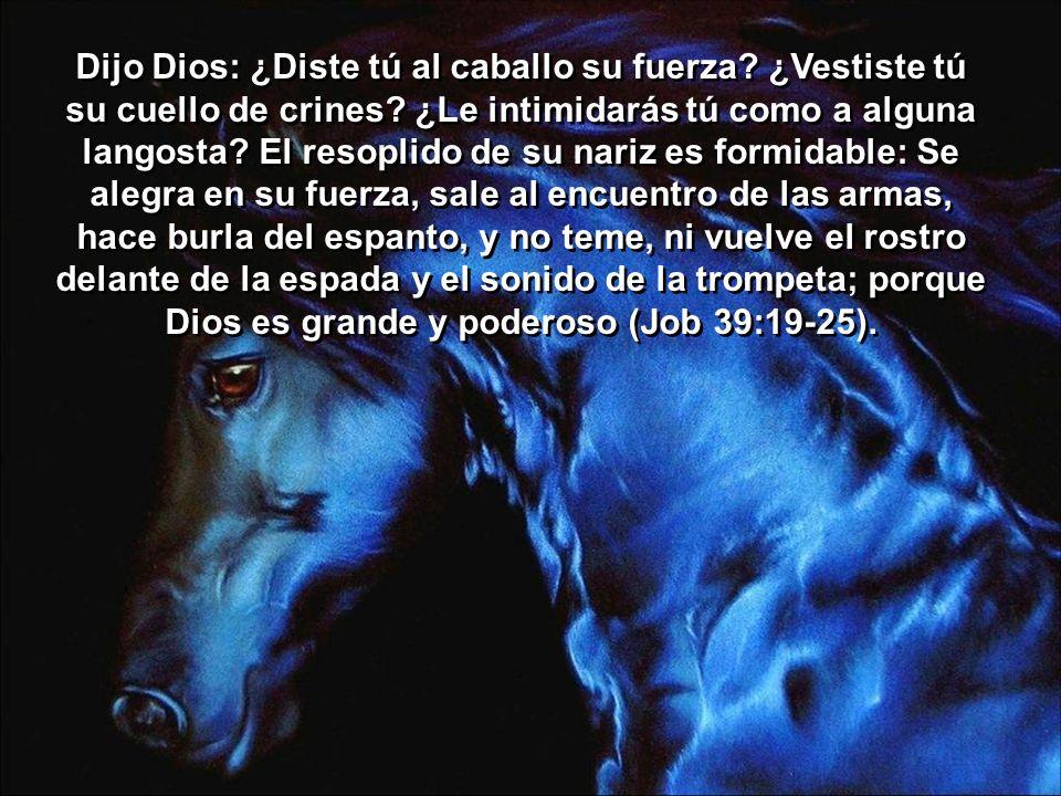 Dijo Dios: ¿Diste tú al caballo su fuerza