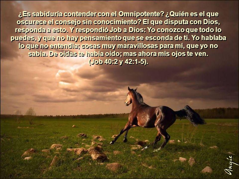 ¿Es sabiduría contender con el Omnipotente