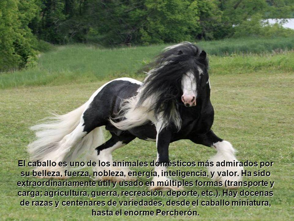 El caballo es uno de los animales domésticos más admirados por su belleza, fuerza, nobleza, energía, inteligencia, y valor.