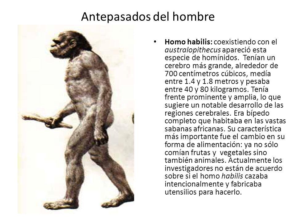 Antepasados del hombre