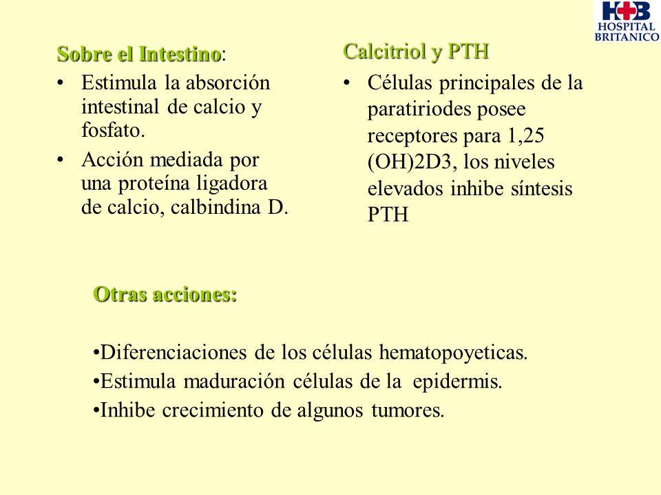 Calcitriol y PTH Células principales de la paratiriodes posee receptores para 1,25 (OH)2D3, los niveles elevados inhibe síntesis PTH.