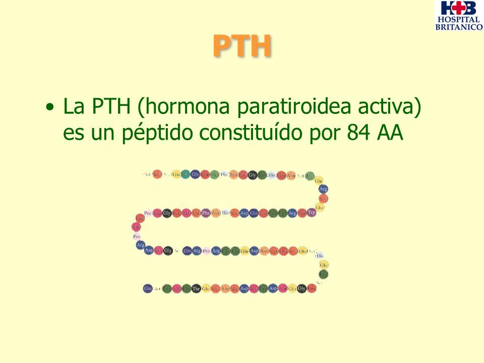 PTH La PTH (hormona paratiroidea activa) es un péptido constituído por 84 AA