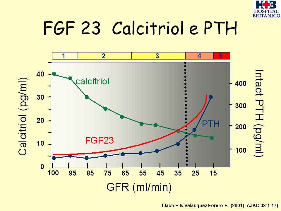 FGF 23 Calcitriol e PTH Llach F & Velasquez Forero F. (2001) AJKD 38:1-17)