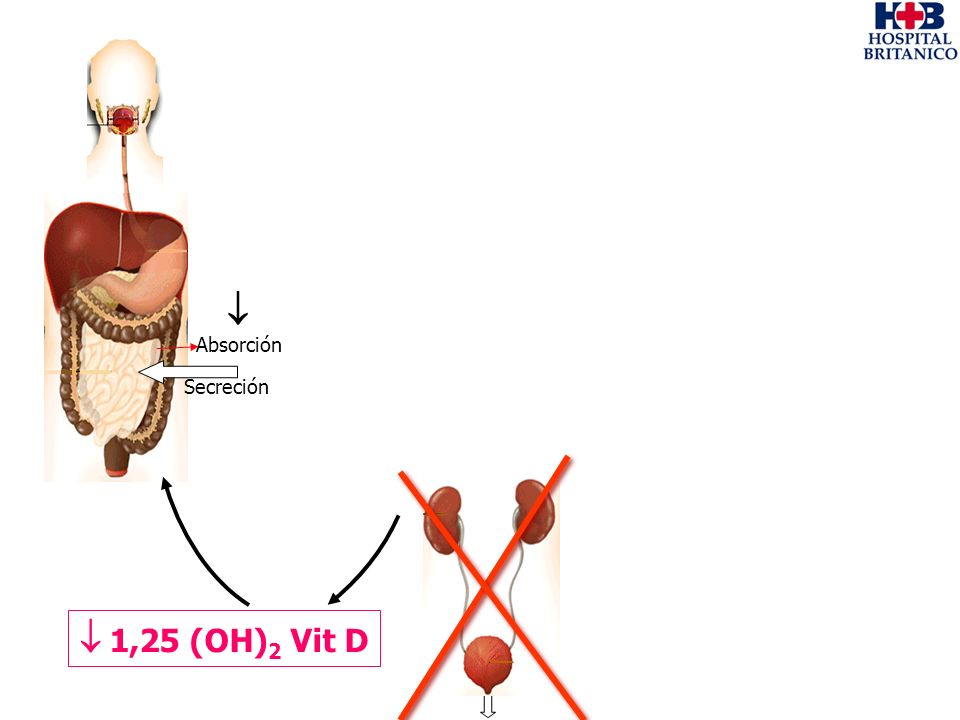  Absorción Secreción  1,25 (OH)2 Vit D