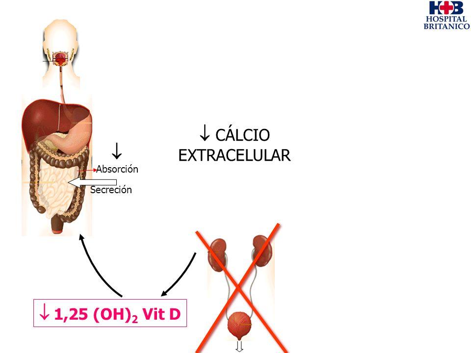  CÁLCIO EXTRACELULAR  Absorción Secreción  1,25 (OH)2 Vit D