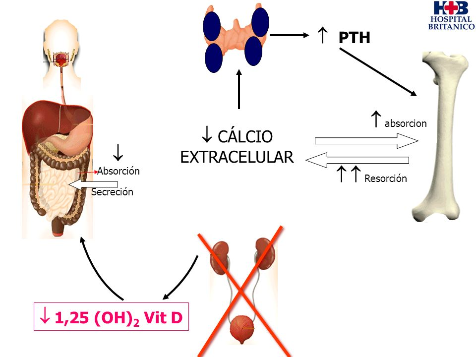  PTH  absorcion  CÁLCIO EXTRACELULAR  Absorción   Resorción