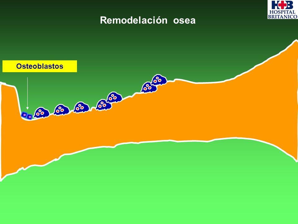 Remodelación osea Osteoblastos