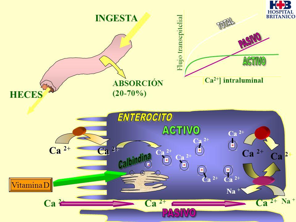 INGESTA HECES ENTEROCITO Ca 2+ Ca 2+ Ca 2+ ABSORCIÓN (20-70%)