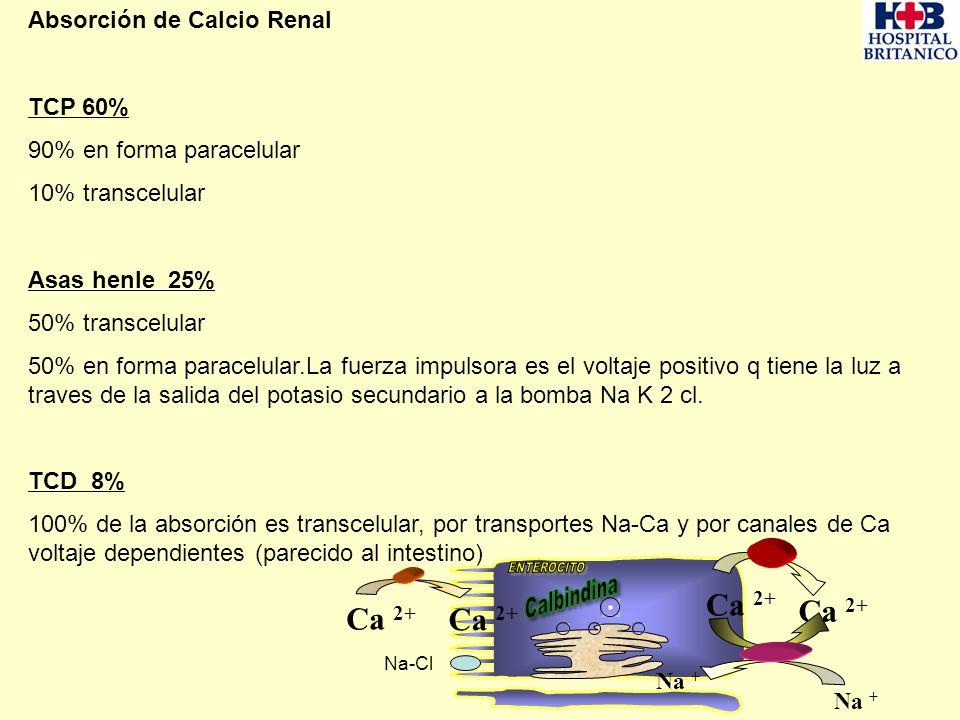ENTEROCITO Ca 2+ Ca 2+ Absorción de Calcio Renal TCP 60%
