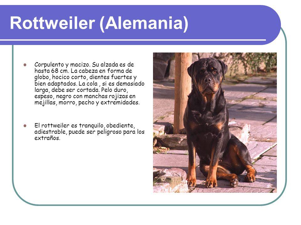 Rottweiler (Alemania)