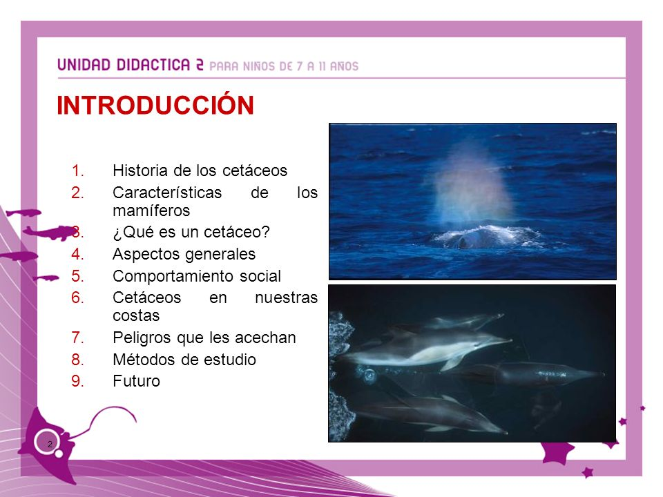 INTRODUCCIÓN Historia de los cetáceos Características de los mamíferos