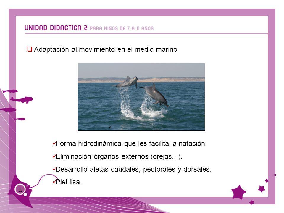 Adaptación al movimiento en el medio marino