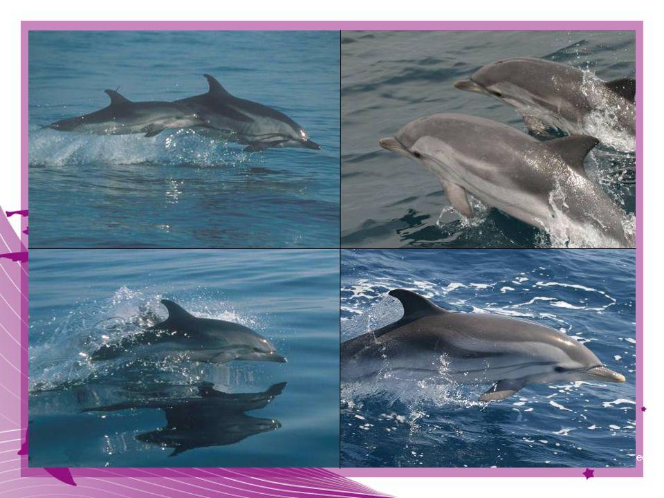 © CIRCE Conservación Información y Estudio de Cetáceos