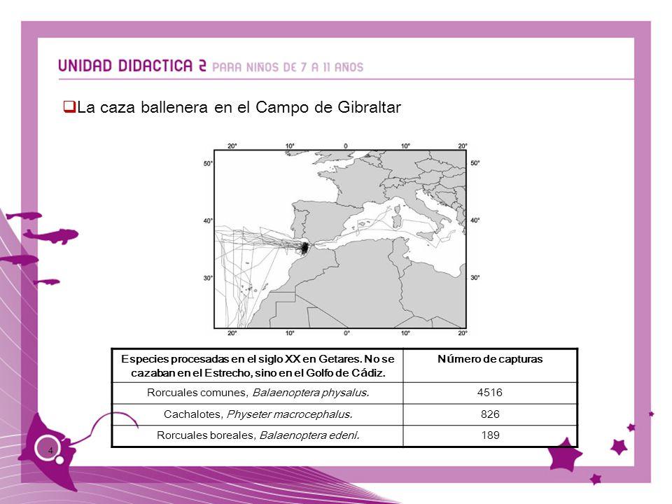 La caza ballenera en el Campo de Gibraltar