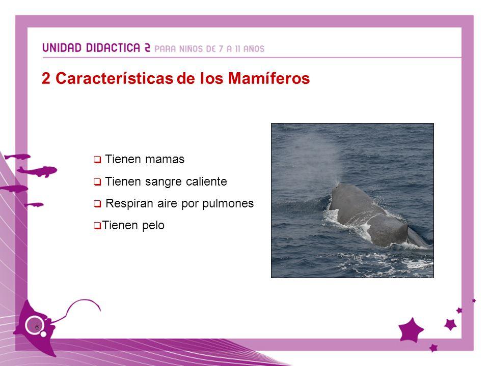 2 Características de los Mamíferos