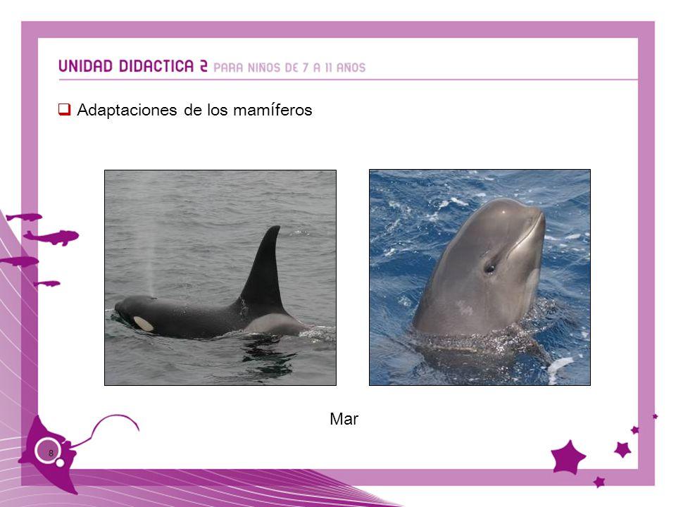 Adaptaciones de los mamíferos